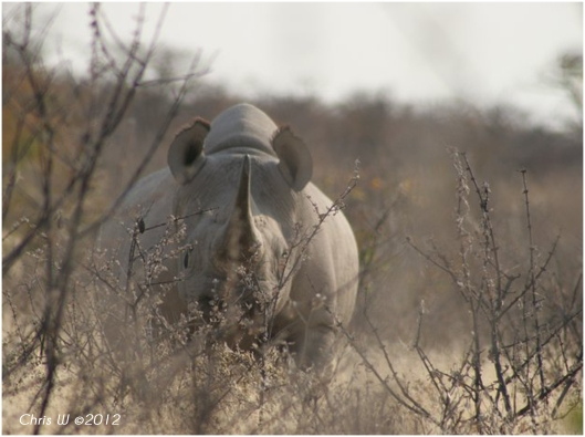awesome rhino pic taken by Chris..