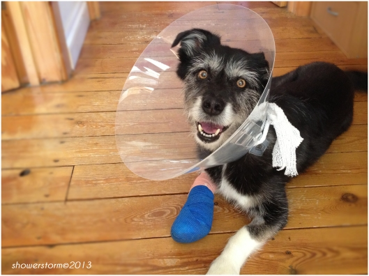 Despite wearing the cone of shame, he doesn't look very shameful..